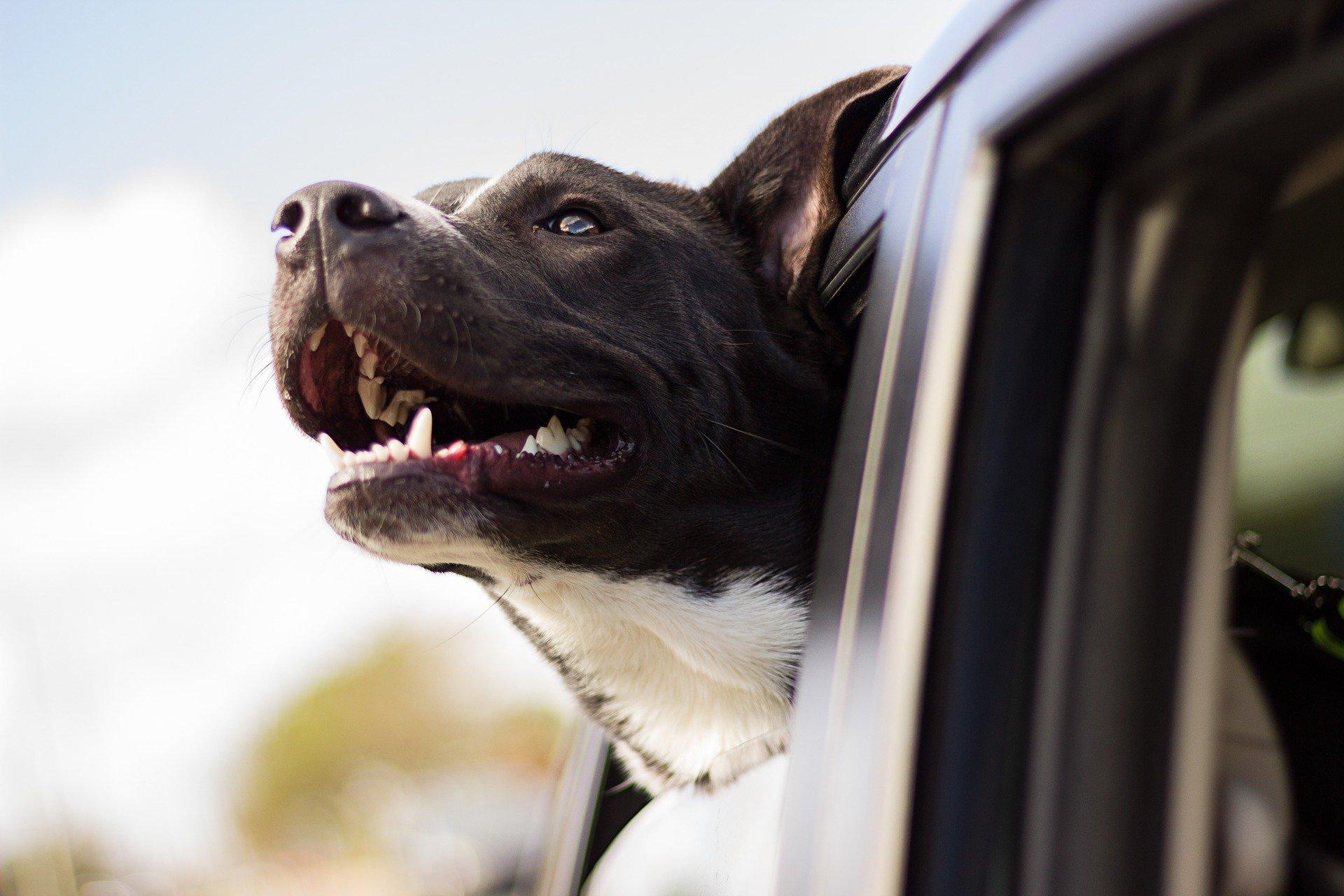 Sveriges 5 populäraste husdjur